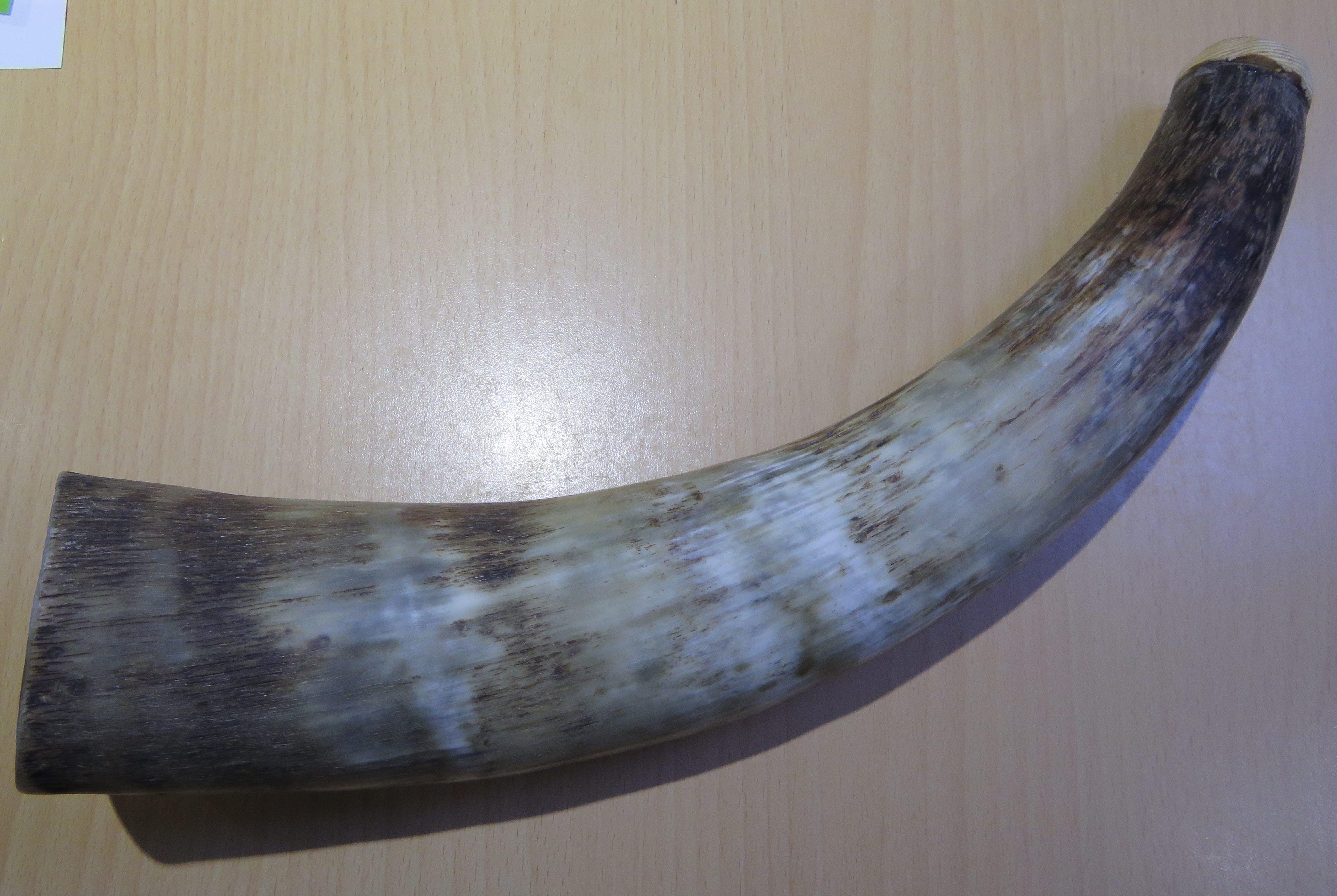 Small War Horn Blowing Horn